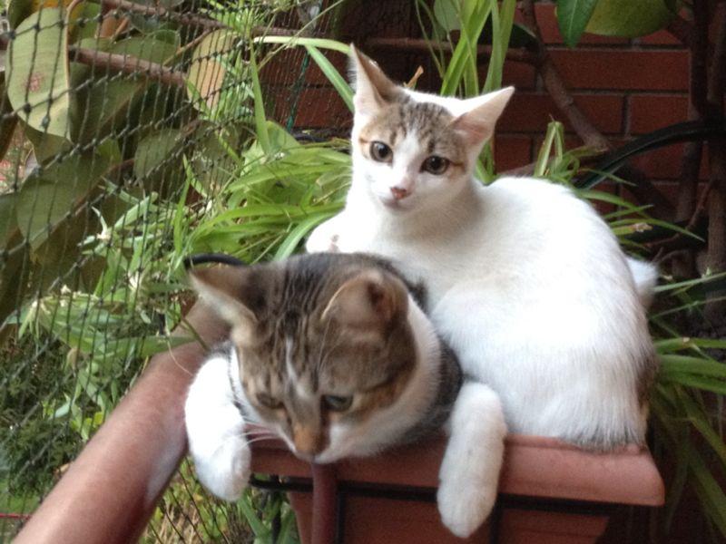 Resumen de ideas para mosquiteras y redes ventanas y balcón para gatos. - Página 2 00811