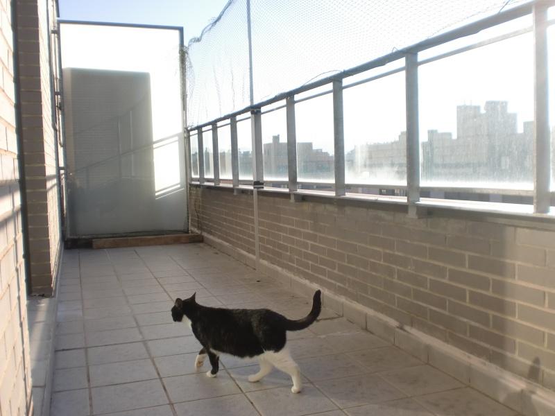 Resumen de ideas para mosquiteras y redes ventanas y balcón para gatos. - Página 2 2zf2xy10