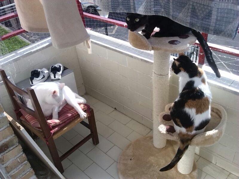 Resumen de ideas para mosquiteras y redes ventanas y balcón para gatos. - Página 2 43510