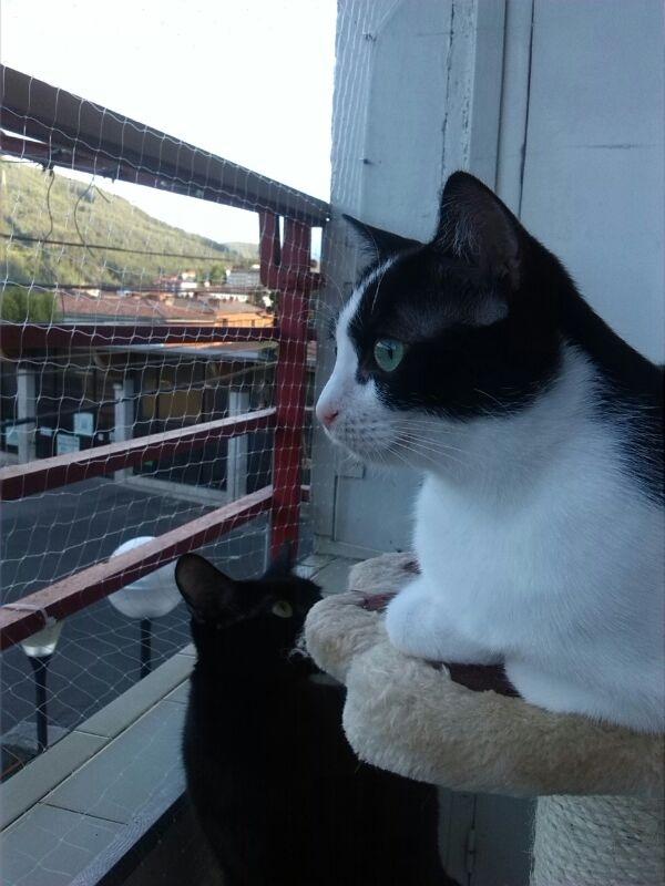 Resumen de ideas para mosquiteras y redes ventanas y balcón para gatos. - Página 2 43610