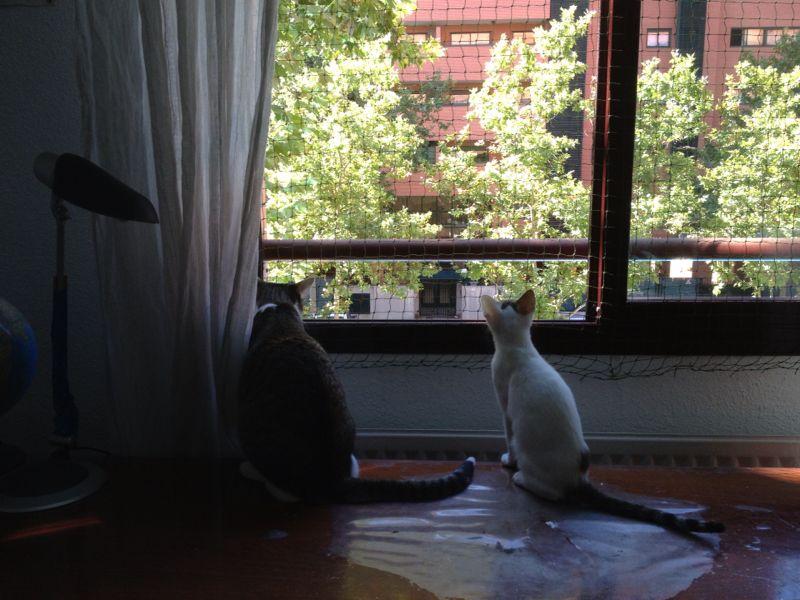 Resumen de ideas para mosquiteras y redes ventanas y balcón para gatos. - Página 2 92910