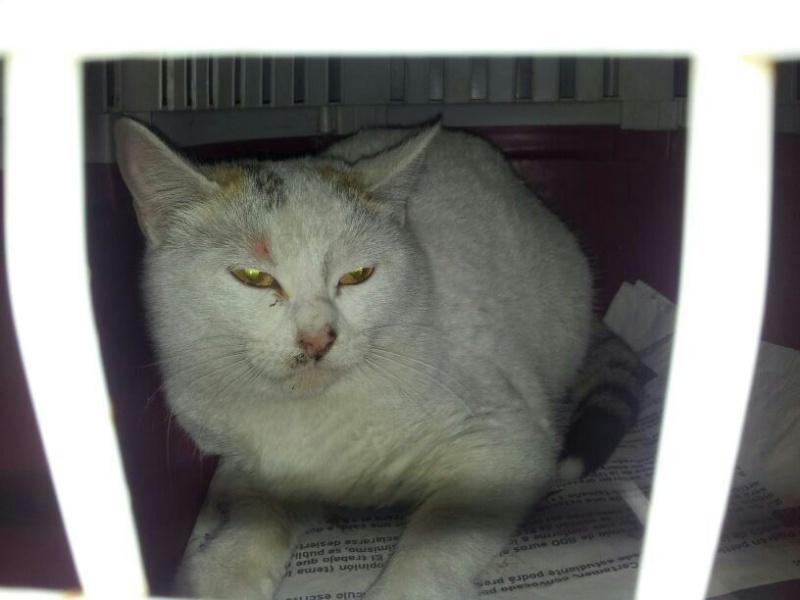 CESCA. La unión de Apa Sos Vitoria y Esperanza Felina por los gatos callejeros de Álava Cantan10