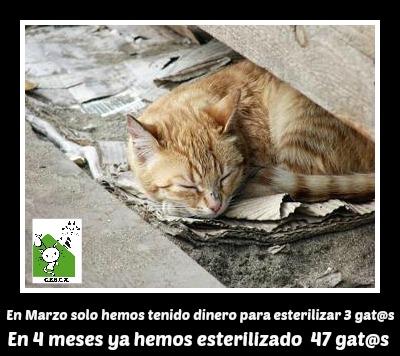 CESCA. La unión de Apa Sos Vitoria y Esperanza Felina por los gatos callejeros de Álava - Página 2 Cesca_11