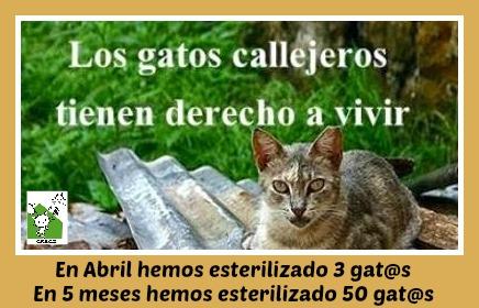 CESCA. La unión de Apa Sos Vitoria y Esperanza Felina por los gatos callejeros de Álava - Página 2 Cesca_12