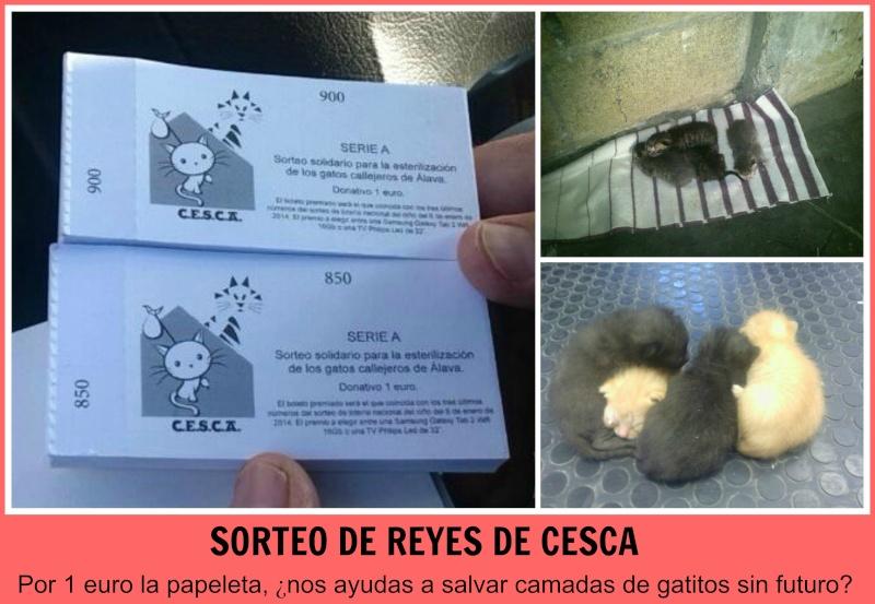 CESCA. La unión de Apa Sos Vitoria y Esperanza Felina por los gatos callejeros de Álava Picmon12