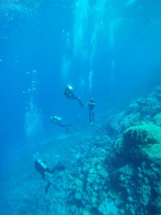 Sortie Club Mer Rouge Plonge10