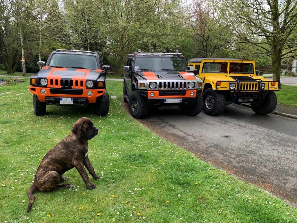 Photos de votre Hummer & animal de compagnie - Page 3 Img_0514