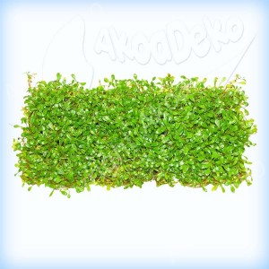 Présentation thib18 Plante10