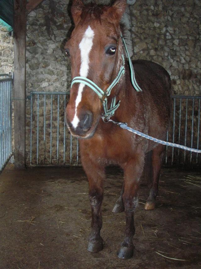 JERRY - ONC Selle (poney) - né en 1991 - adopté en avril 2014  Dscn9212
