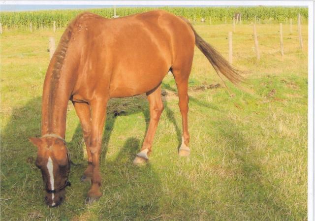 JERRY - ONC Selle (poney) - né en 1991 - adopté en avril 2014  Jerry10
