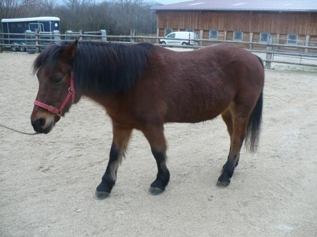 LEON - ONC poney né en 2000 - adopté en mars 2014 par Bilby Leon_013