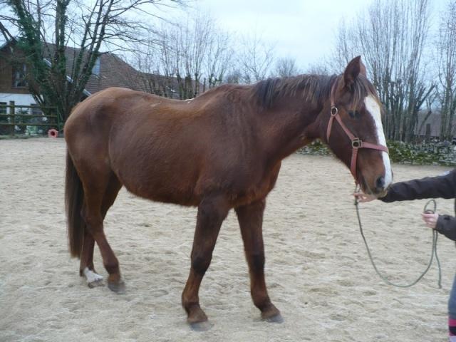 LORETTE - ONC selle née en 1998 - adoptée en mars 2014 par galatéwouindy Lorett17