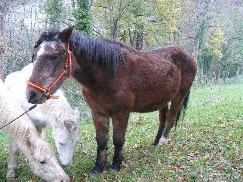 SAFRAN - Welsh Pony né en 1984 - adopté en janvier 2015 par Fabienne Safran10