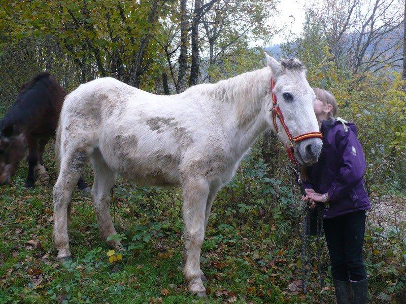 TOSCAN - ONC Poney né en 1986 -  adopté en janvier 2015 par Fabienne Toscan10