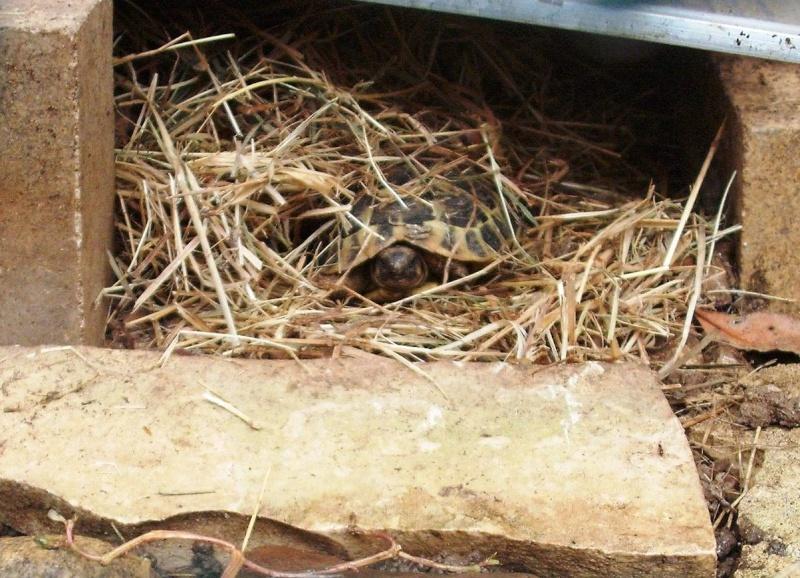 un petit coucou très timide avant l'hibernation Dscf7111