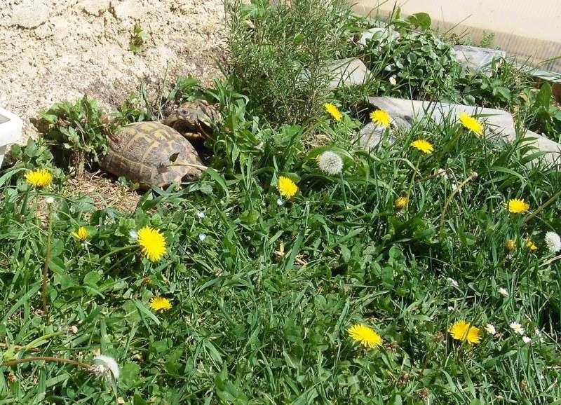Trop d'herbe dans l'enclos? - Page 2 Dscf7714