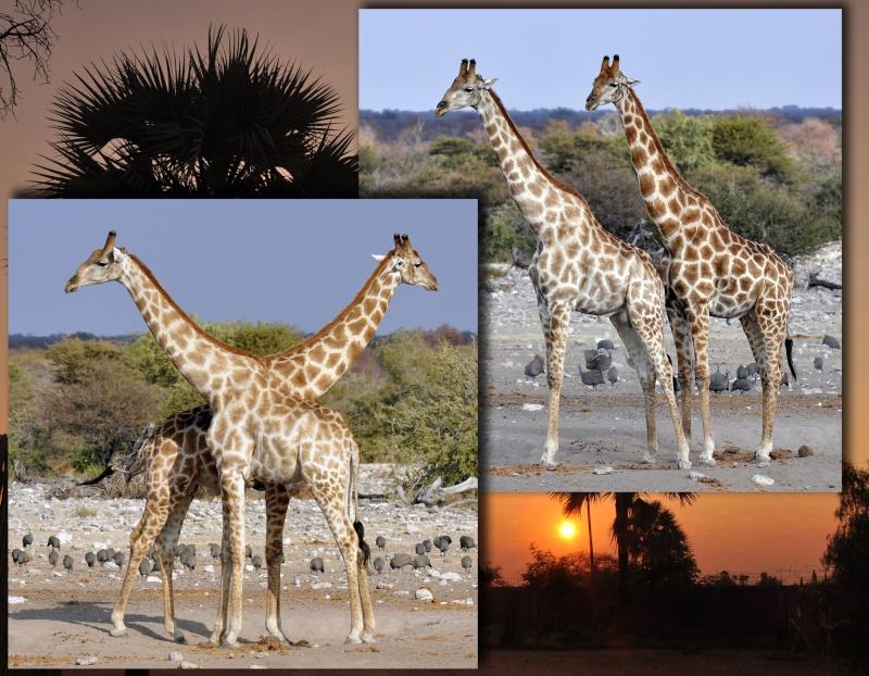 Fotografia Namibi11