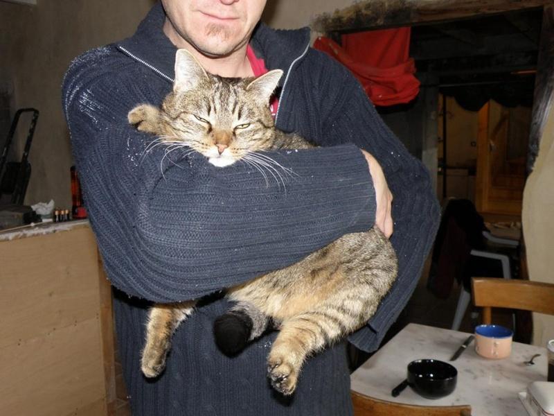 nouvelles du chat RASTA 14977410