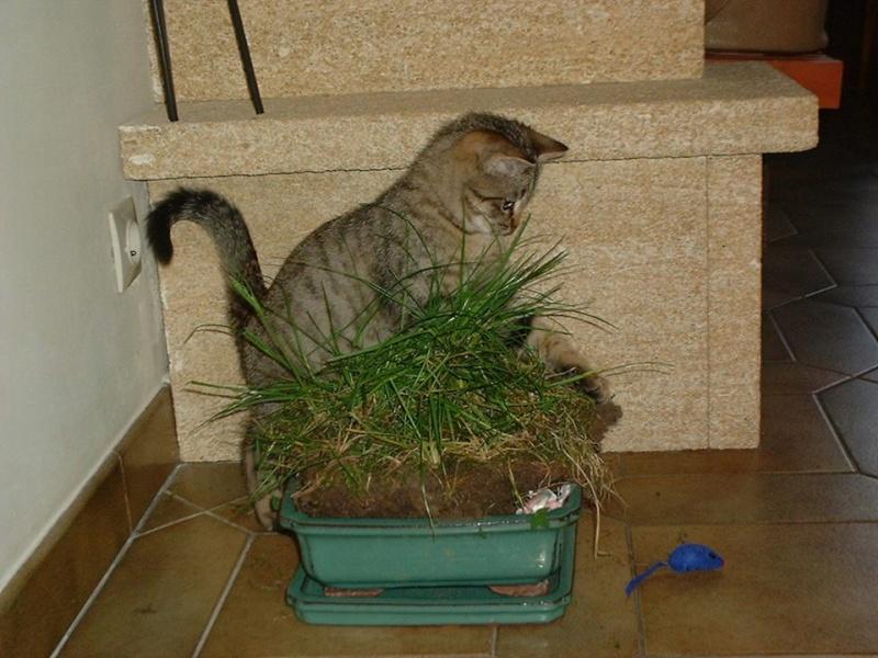nouvelles du chat RASTA 14994710