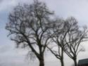 concours 12 paysages féériques d'hiver Img_0012