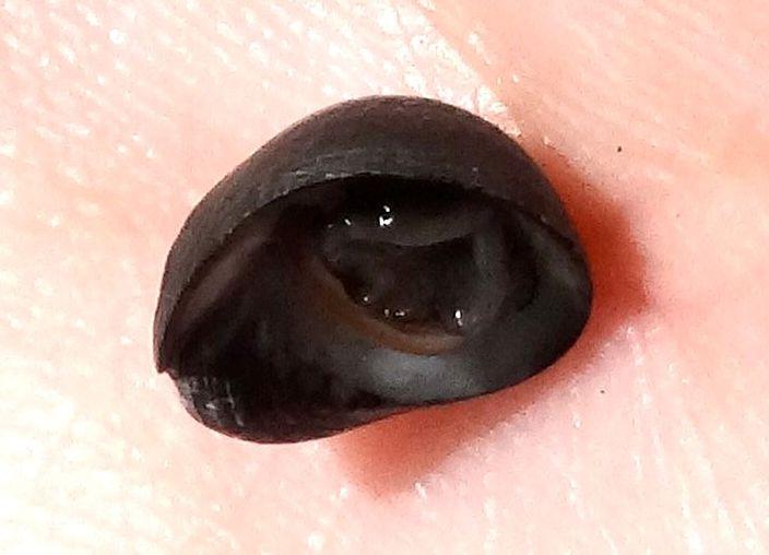 Nerita senegalensis - Gmelin, 1791 Dsc06610