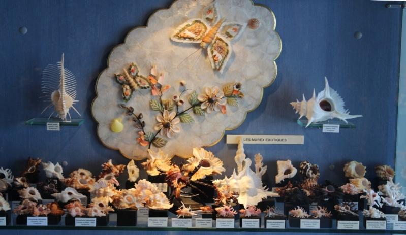 Musée des coquillages de Méditerranée de Saint Jean-Cap Ferrat (06) Img_4323
