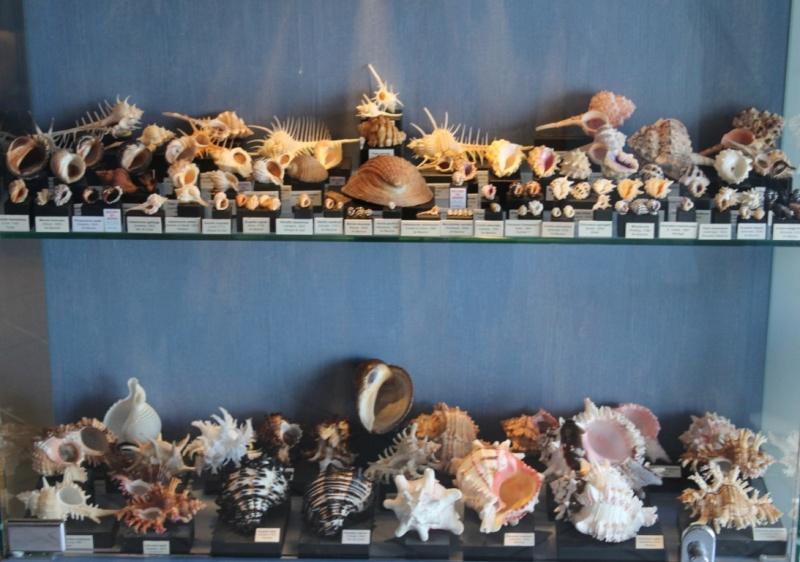 Musée des coquillages de Méditerranée de Saint Jean-Cap Ferrat (06) Img_4324