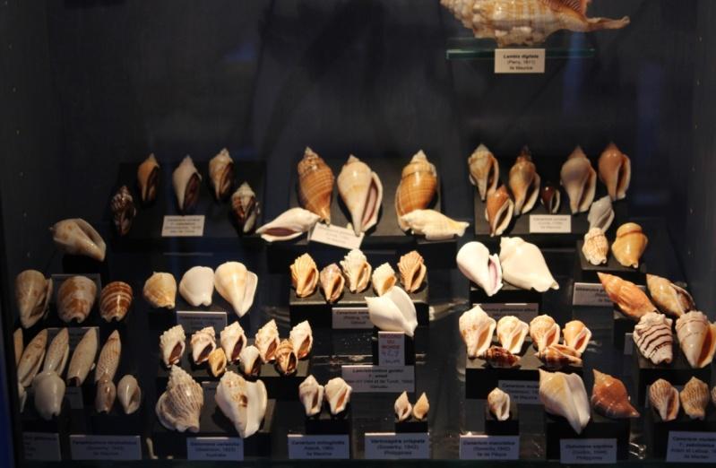 Musée des coquillages de Méditerranée de Saint Jean-Cap Ferrat (06) Img_4325