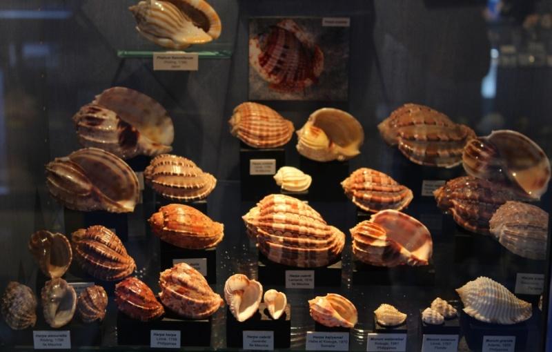 Musée des coquillages de Méditerranée de Saint Jean-Cap Ferrat (06) Img_4326