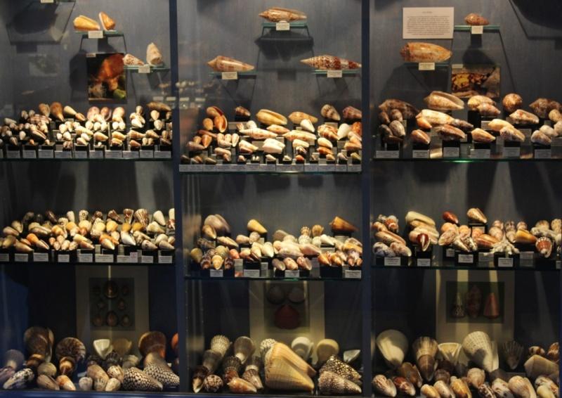 Musée des coquillages de Méditerranée de Saint Jean-Cap Ferrat (06) Img_4327