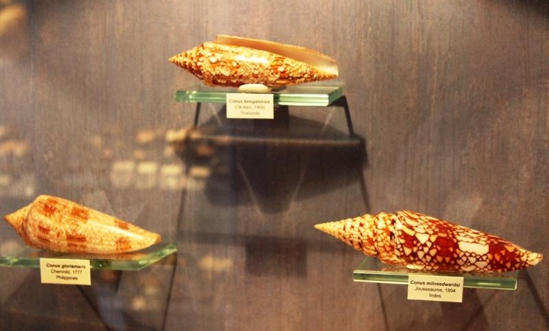 Musée des coquillages de Méditerranée de Saint Jean-Cap Ferrat (06) Img_4328