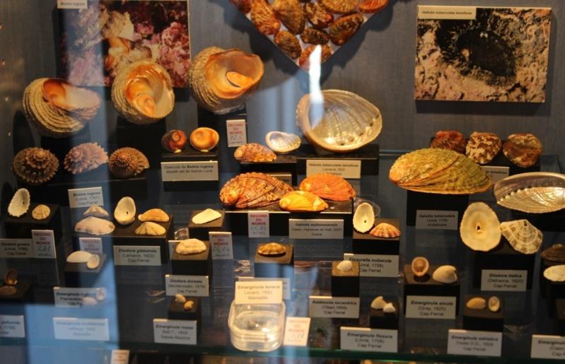 Musée des coquillages de Méditerranée de Saint Jean-Cap Ferrat (06) Img_4330