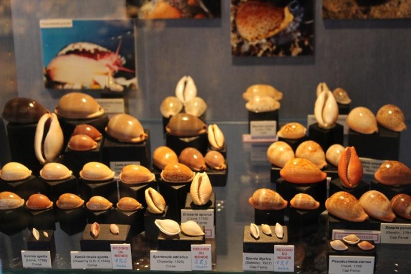 Musée des coquillages de Méditerranée de Saint Jean-Cap Ferrat (06) Img_4331