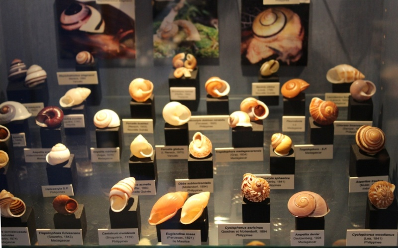 Musée des coquillages de Méditerranée de Saint Jean-Cap Ferrat (06) Img_4332
