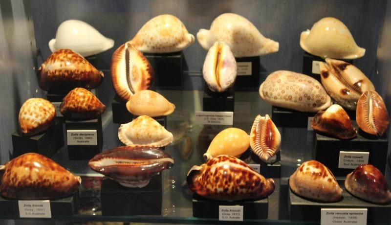 Musée des coquillages de Méditerranée de Saint Jean-Cap Ferrat (06) Img_4349