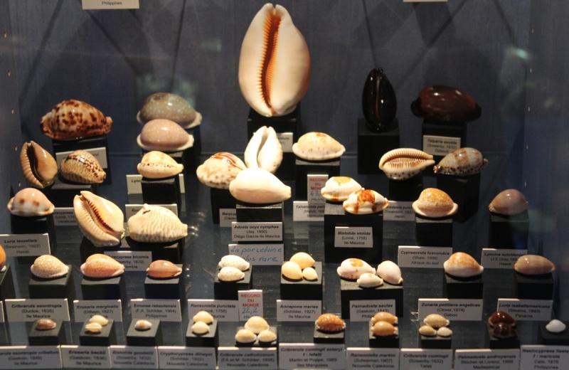 Musée des coquillages de Méditerranée de Saint Jean-Cap Ferrat (06) Img_4350