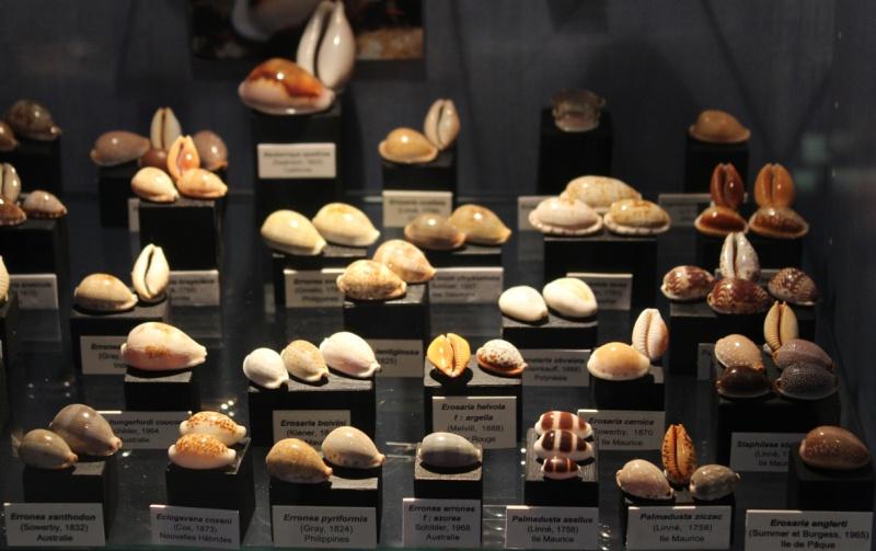 Musée des coquillages de Méditerranée de Saint Jean-Cap Ferrat (06) Img_4351