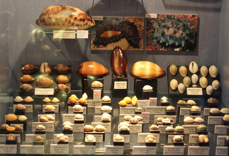 Musée des coquillages de Méditerranée de Saint Jean-Cap Ferrat (06) Img_4352
