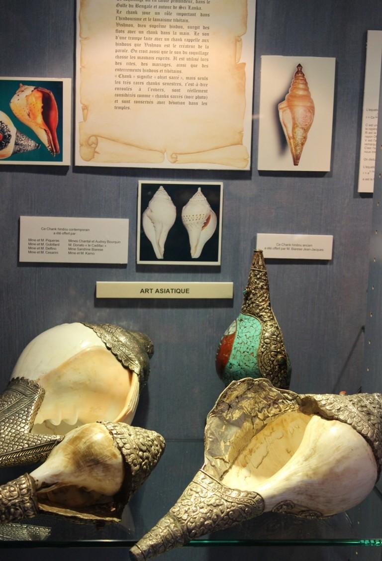 Musée des coquillages de Méditerranée de Saint Jean-Cap Ferrat (06) Img_4355