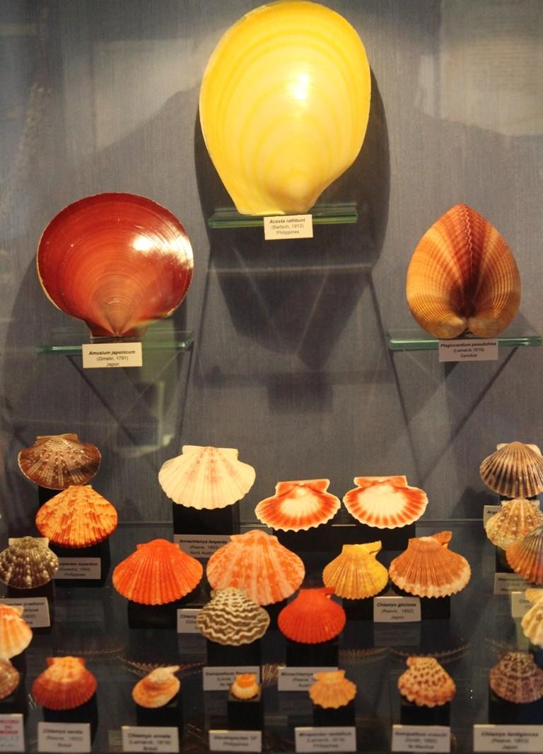 Musée des coquillages de Méditerranée de Saint Jean-Cap Ferrat (06) Img_4356