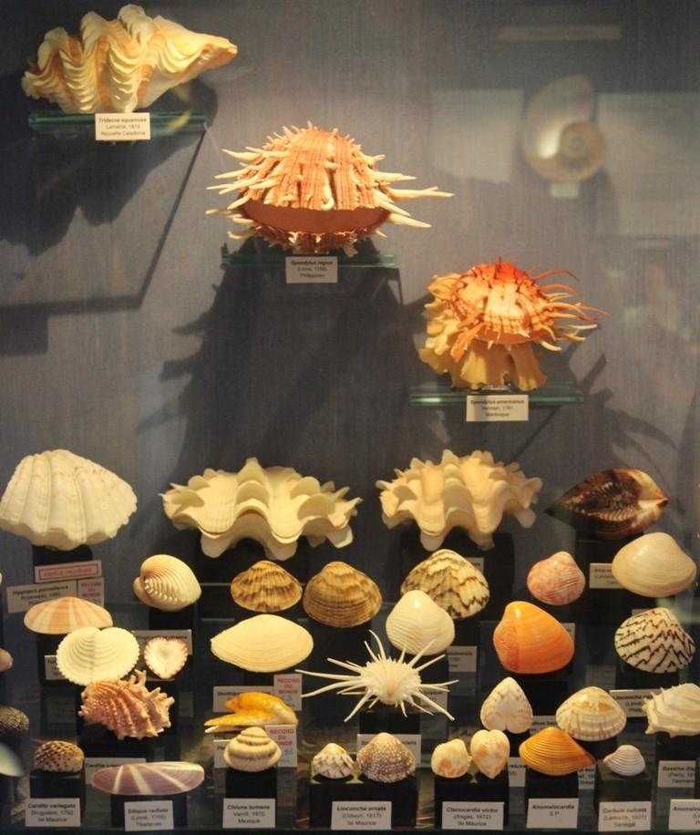 Musée des coquillages de Méditerranée de Saint Jean-Cap Ferrat (06) Img_4359