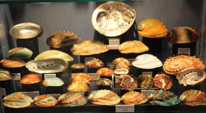 Musée des coquillages de Méditerranée de Saint Jean-Cap Ferrat (06) Img_4360