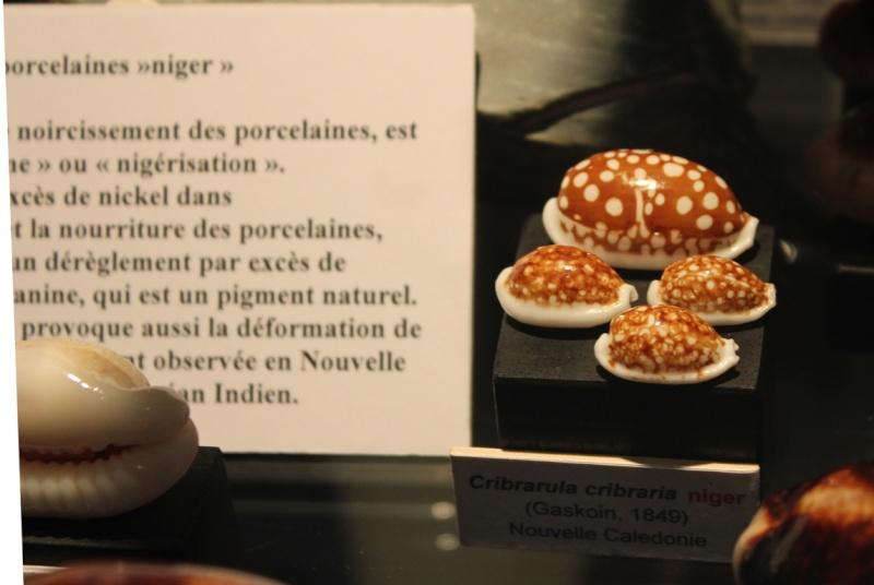 Musée des coquillages de Méditerranée de Saint Jean-Cap Ferrat (06) Img_4361