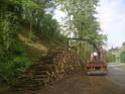foto dal bosco, i nostri mezzi all'opera - Pagina 2 01111