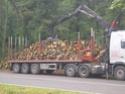 foto dal bosco, i nostri mezzi all'opera - Pagina 2 01311