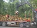 foto dal bosco, i nostri mezzi all'opera - Pagina 2 01512