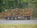 foto dal bosco, i nostri mezzi all'opera - Pagina 2 01911