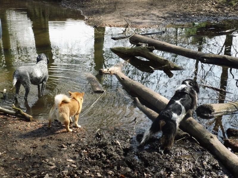 Balades canines en Nord (59)/Pas de Calais (62) - Boulogne-sur-Mer, Calais et Lille - Page 3 Dsci1012