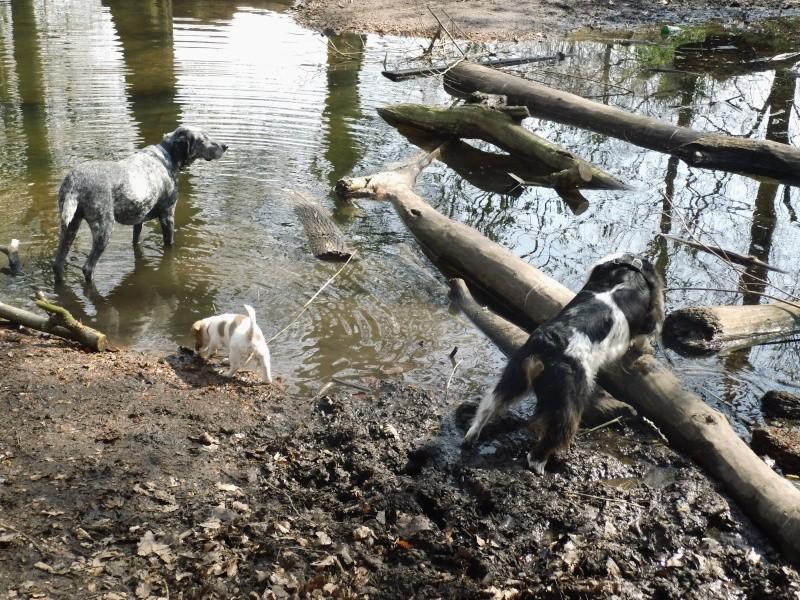 Balades canines en Nord (59)/Pas de Calais (62) - Boulogne-sur-Mer, Calais et Lille - Page 3 Dsci1013