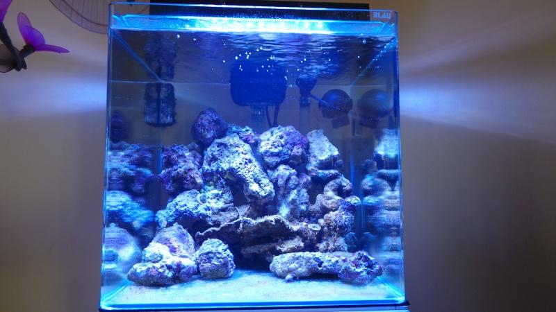 reef nano 20140326